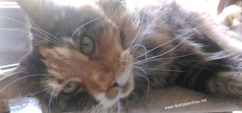 Luzi - Catsitting Ludweiler