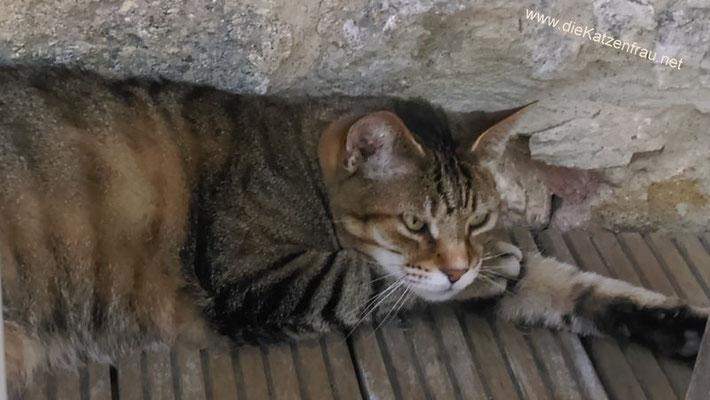 Matz - Catsitting - die Katzenfrau
