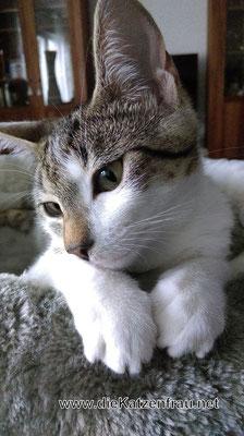 Coockie - mobile Katzenbetreuung Wadgassen