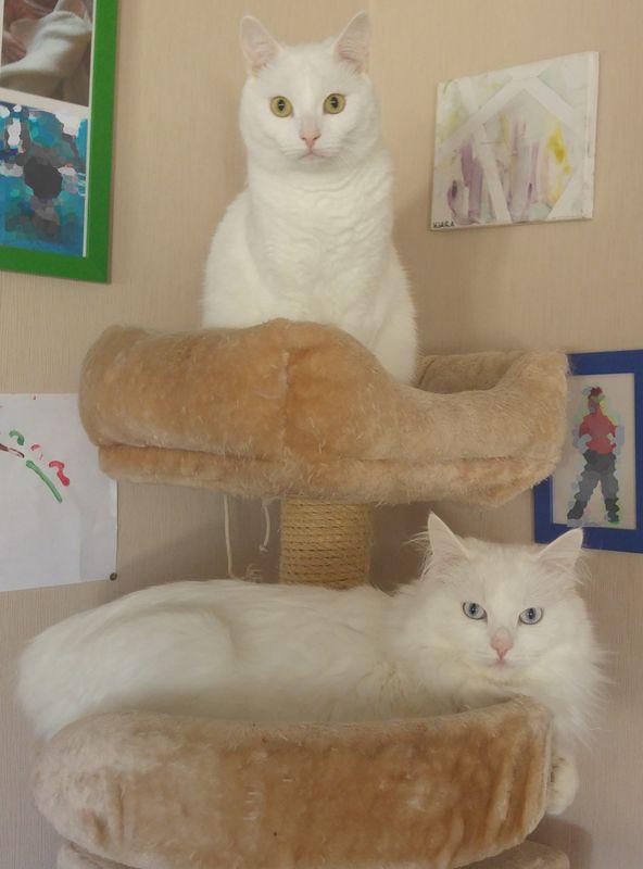 Lola & Levi - Catsitting - die Katzenfrau