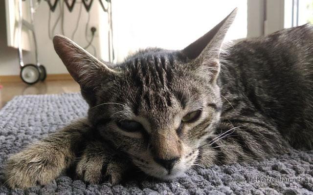 Molly - mobile Katzenbetreuung Wadgassen