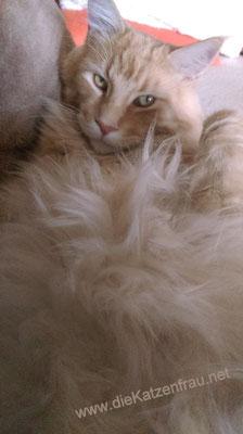 Manni  - Catsitting Ludweiler