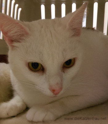 Blanchet  - Catsitting Dillingen
