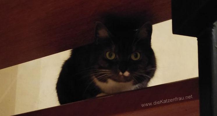 Julchen - Catsitting Wadgassen