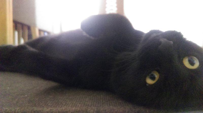 Mandou - Catsitting Saarlouis