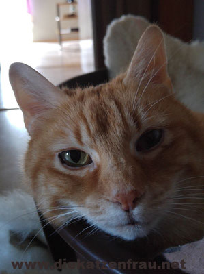 Lord  - Catsitting Wadgassen