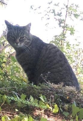 Trouble - Catsitting Beckingen