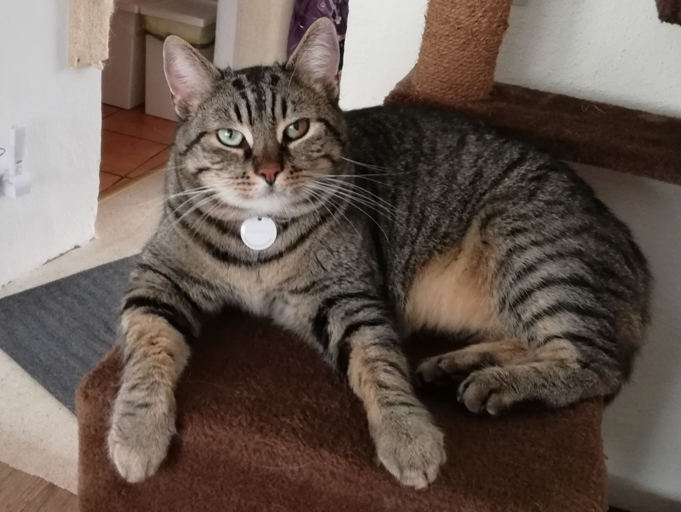 Tiger - mobile Katzenbetreuung Thalfang