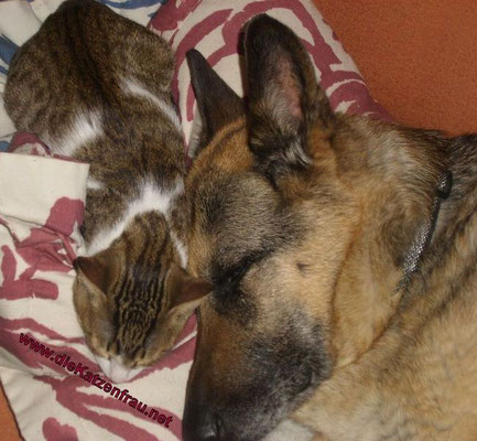 wie Hund und Katz ;)