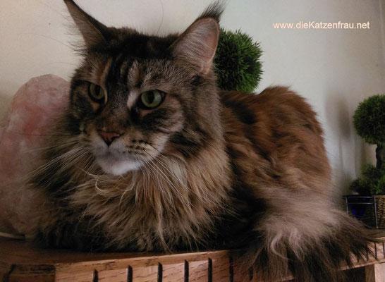 Dischi  - Catsitting Ludweiler