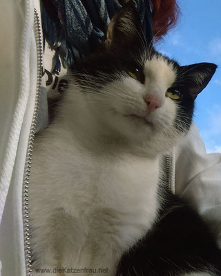 Ein kleiner Charmeur  - Catsitting - die Katzenfrau