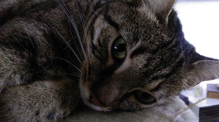 Twix  - Catsitting Saarlouis