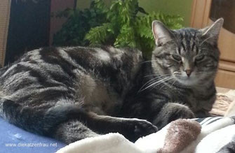 Catsitting Saarland - Die Katzenfrau - Mobile Katzenbetreuung - Catsitter mit Herz