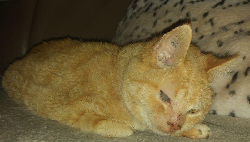 Oma Shila - mobile Katzenbetreuung Völklingen