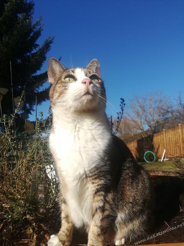 Catsitting die Katzenfrau - St. Wendel