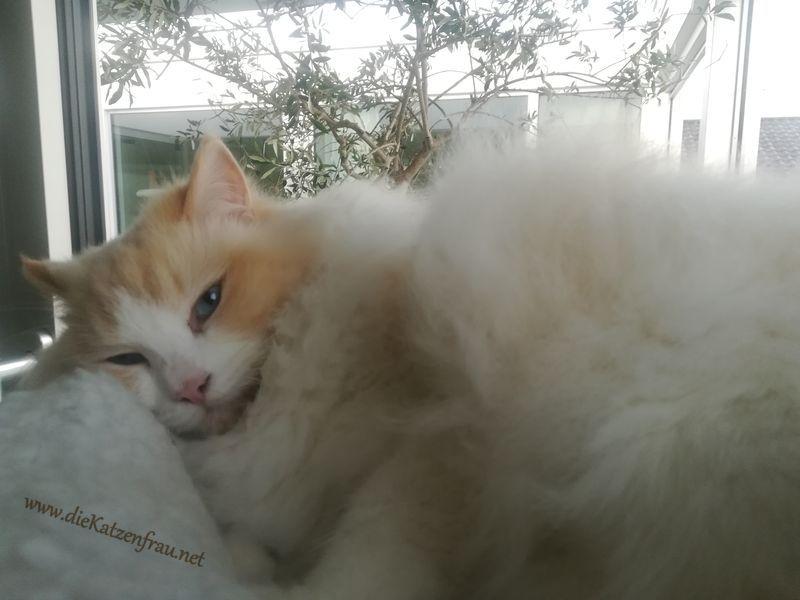 Louis - Katzenbetreuung Wadern