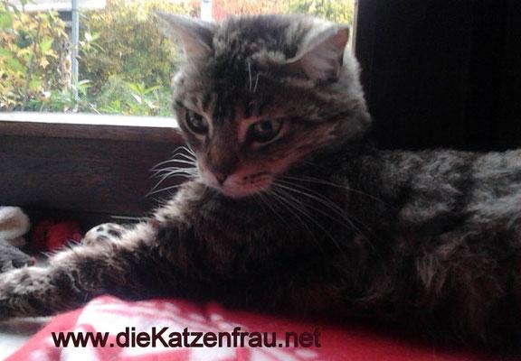 Püppi - mobile Katzenbetreuung - die Katzenfrau