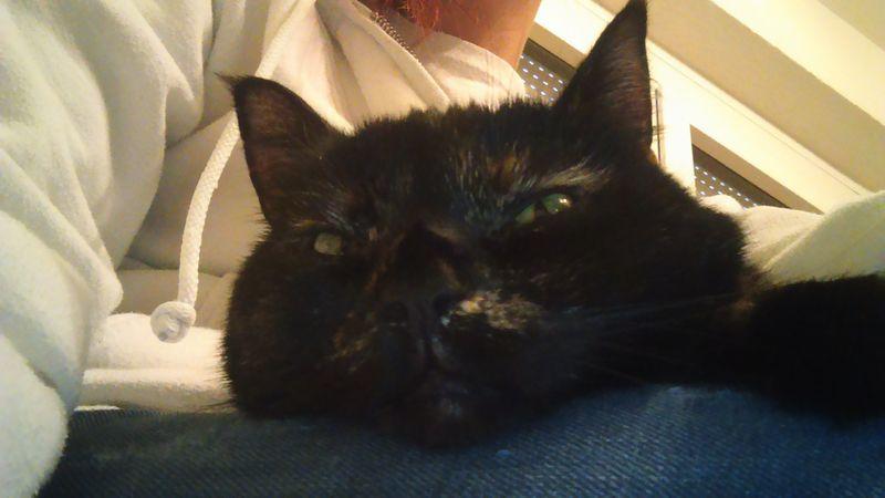 Die Katzenfrau - Catsitting Bous