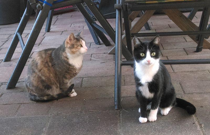 Lilu, Grisu, Filou, Maxi & Tiffy  - Catsitting - die Katzenfrau