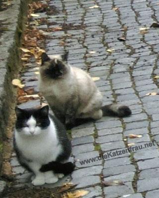 Felipe und Marie - mobile Katzenbetreuung - die Katzenfrau