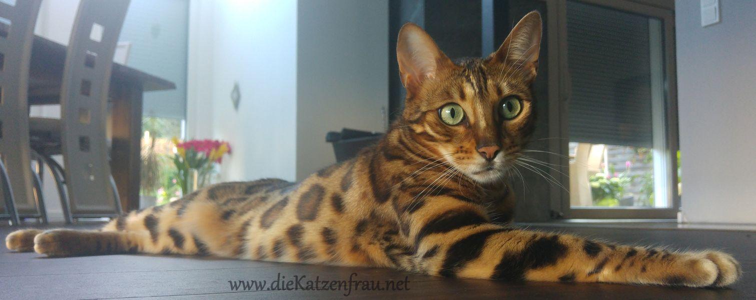 Fiebie -  - Catsitting Wadgassen