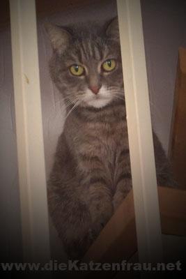 Klara  - Catsitting Wadgassen