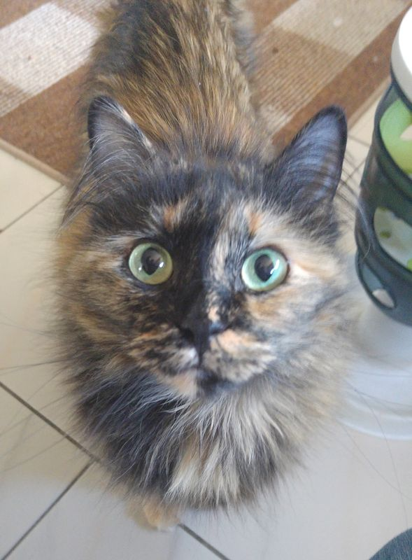 Elly - Catsitting - die Katzenfrau