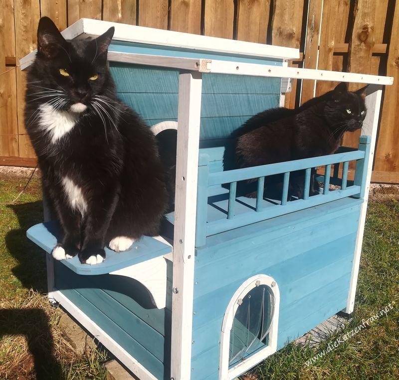 Catsitting die Katzenfrau - Nonnweiler
