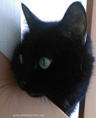 Paula- mobile Katzenbetreuung Dillingen