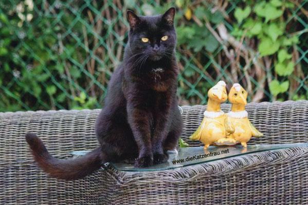 Oliver - mobile Katzenbetreuung Altenkessel
