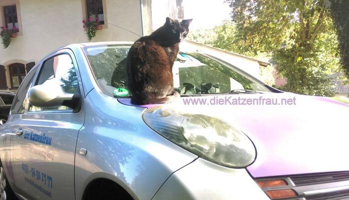 mobile Katzenbetreuung - die Katzenfrau