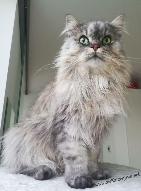 Henry - Katzenbetreuung Wadern