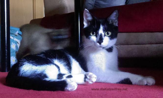 Gismo - Catsitting Großrosseln
