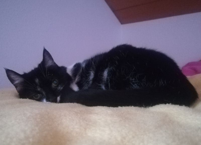 Mädchen - Catsitting Tholey