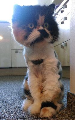 Abby  - Catsitting Wadgassen