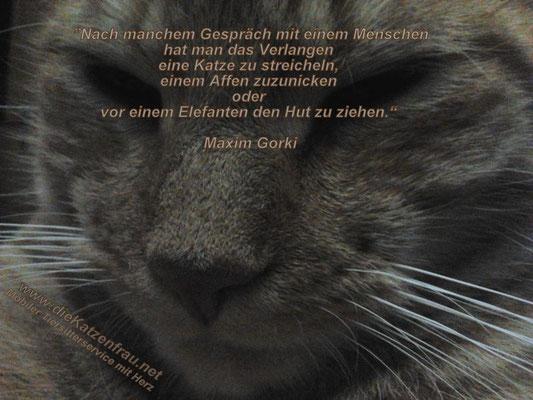 Mobile Tierbetreuung - Die Katzenfrau - Catsitting Saarland