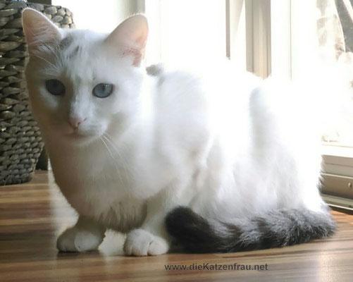 Katze - Catsitting Saarlouis