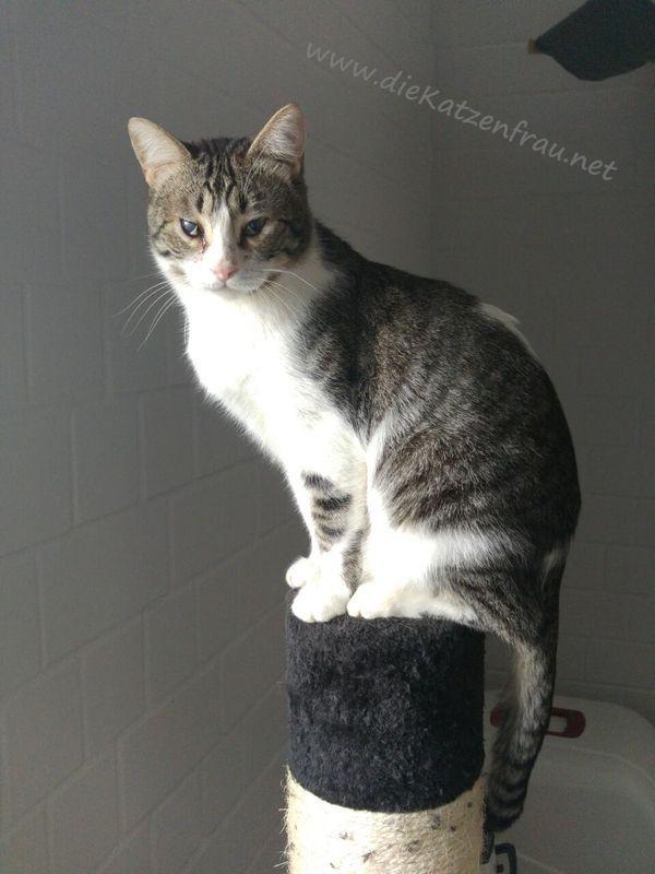 Buddy - Catsitting Beckingen
