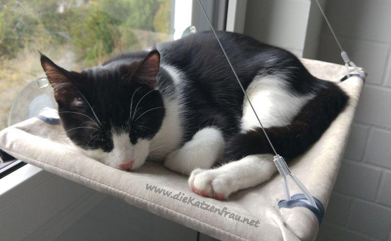 Rico  - Catsitting Beckingen