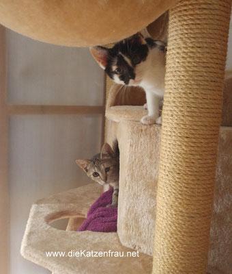 Lillifee & Lotte- mobile Katzenbetreuung Großrosseln