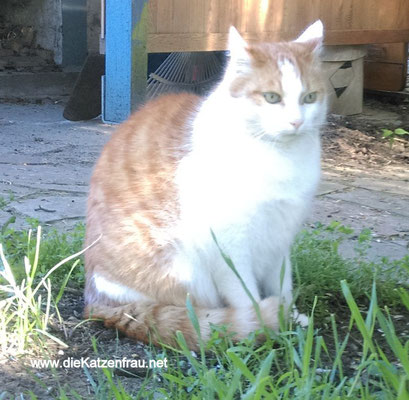 Tommy, Mika & Gismo  - Catsitting Wadgassen