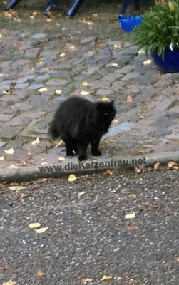 Francesca - mobile Katzenbetreuung - die Katzenfrau