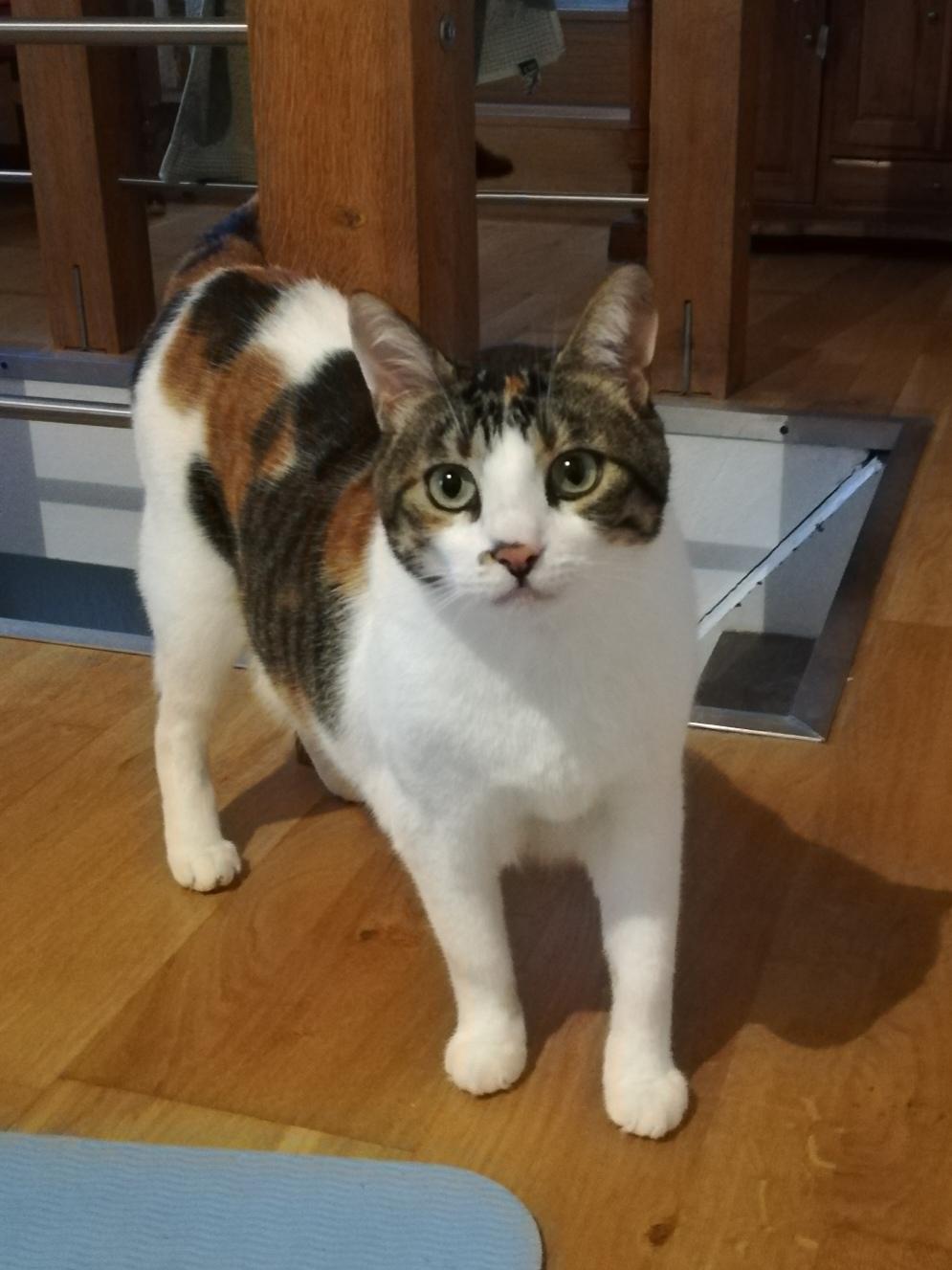 Meggie - mobile Katzenbetreuung Wallerfangen