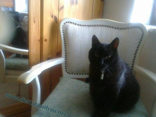 Tabby - Catsitting Altenkessel