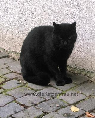 - Catsitting - die Katzenfrau