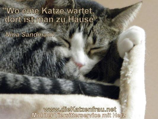 Catsitter Wadgassen - Kontakt Katzenfrau