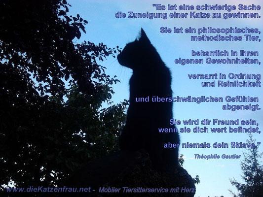 Buchung - Catsitting Saarland - Mobile Katzenbetreuung
