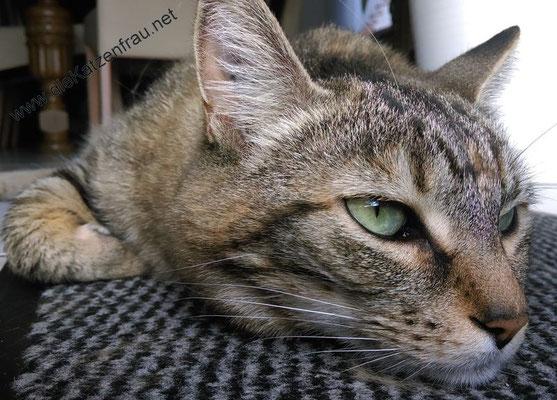 Purzel - Mobile Katzenbetreuung Püttlingen