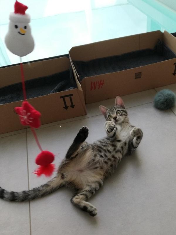Romy - Catsitting Wadern
