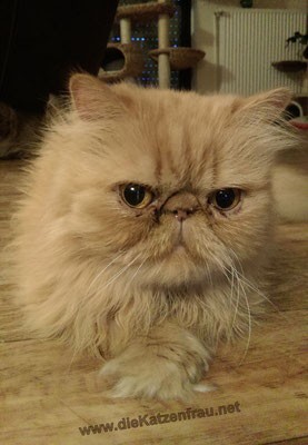 DaVinci  - Catsitting Wadgassen